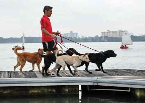Человек с собаками. Фото: ROSLAN RAHMAN/AFP/Getty Images
