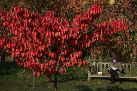 Королевский ботанический сад Кью, считающийся самым красивым парком Лондона, в 2013  году приобрёл особо яркие цвета осени из-за рекордно холодной весны. Фото: Peter Macdiarmid/Getty Images