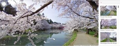 japaneseTrees-e1385494491661