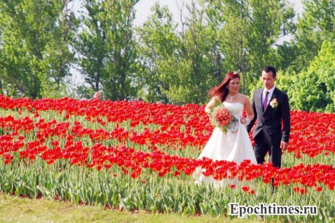 семья, брак, брачный контракт, брачный договор