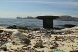Загрязнённые воды Рио-де-Жанейро могут сорвать олимпийские соревнования