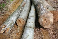 лес, фото леса