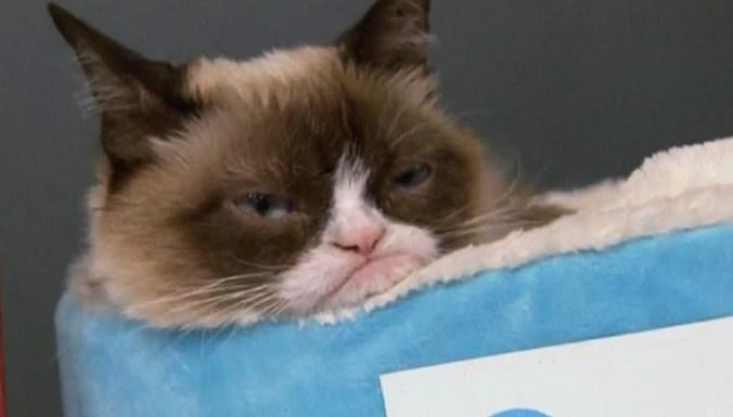 Тысячи фанатов Сердитой Кошки пришли на встречу с любимицей