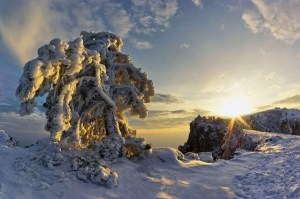 Крым засыпало снегом. Фото с сайта http://news.allcrimea.net/