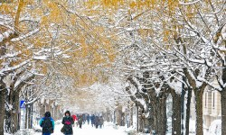 В Саратове выпал коричневый снег