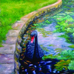 Black-Swan-Beautiful-Rare-30x40-240x240