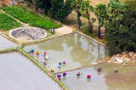 Как сажают рис в Индии. Фото: Татьяна Виноградова/Великая Эпоха