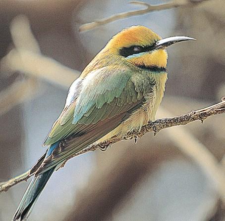 Australia, Northern Territory   BIRD
