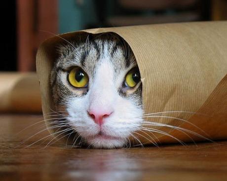 Говорят что мода на котов