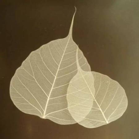 Leaf-after-rubbing-washing-drying_NetworkPhotos