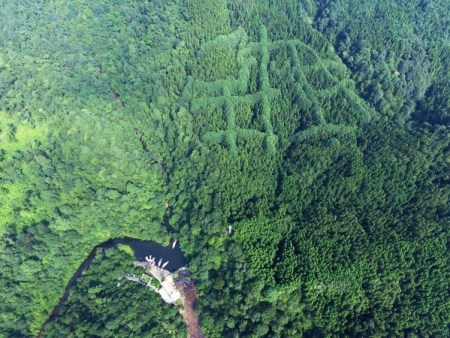 mysterious-pattern-forest-China-600x450