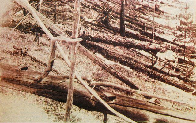 640px-Tunguska_event_fallen_trees