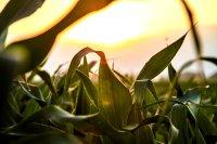 ГМО, ГМ-культура, питание, Европа