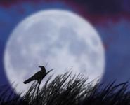 Лунотрясение, Луна,планетологи, спутник, Земля, гравитация