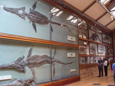 Скелеты морских чудовищ