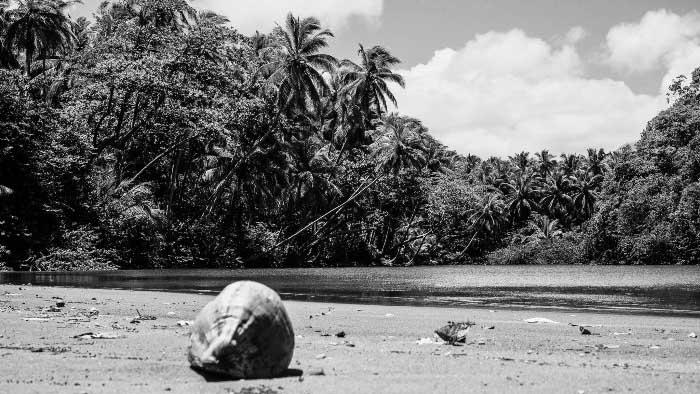 кокос, море