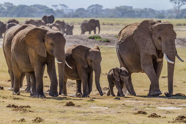 видео дикой природы, слоны