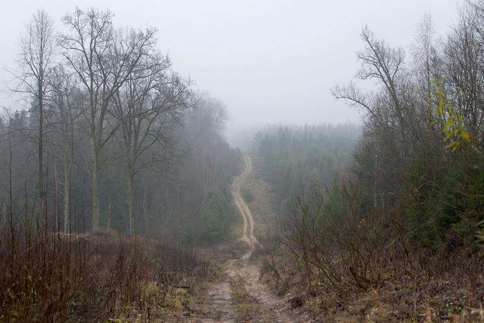 Фото: birdinflight.com