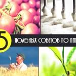 питание, здоровье, жиры, сладкое, ГМО