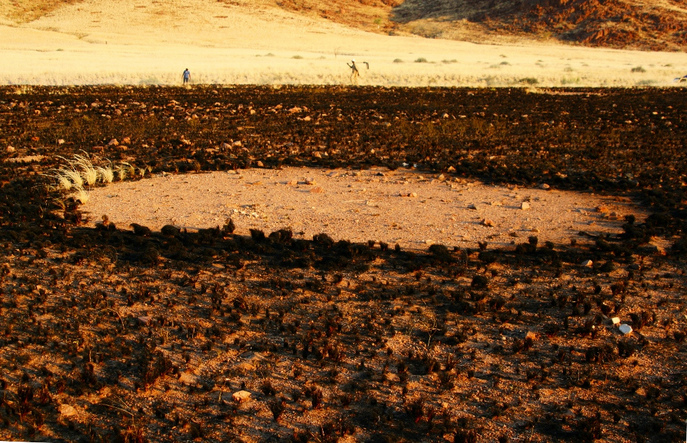 «Ведьмин круг» в намибии. Фото: Vernon Swanepoel/flickr.com/CC BY 2.0