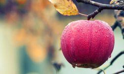 яблоко, осень, фрукт