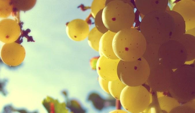 виноград, экстракт