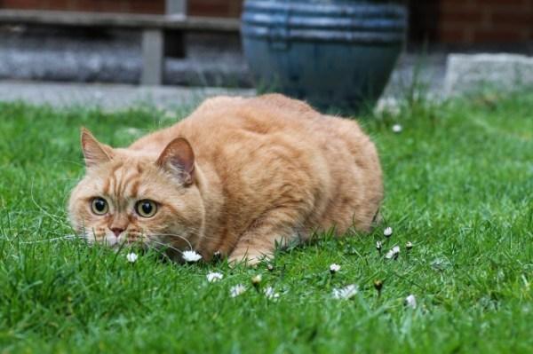 (Фото) Кот потрясён до глубины души: хозяйка рассыпала его ...