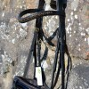 dressage bridle