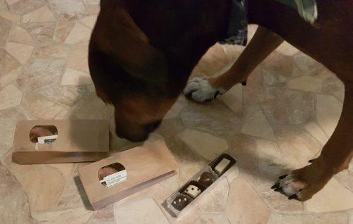 dilli-dog-testpaket