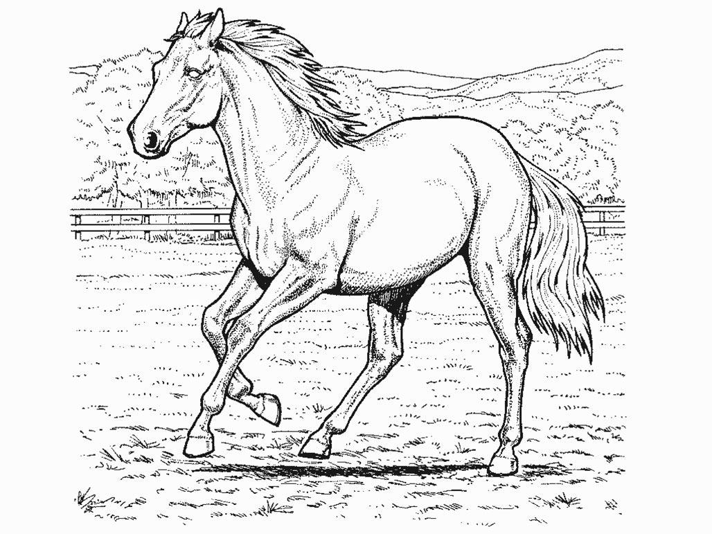 Horse Coloring Pages Free Coloring Pages 2 Free Printable