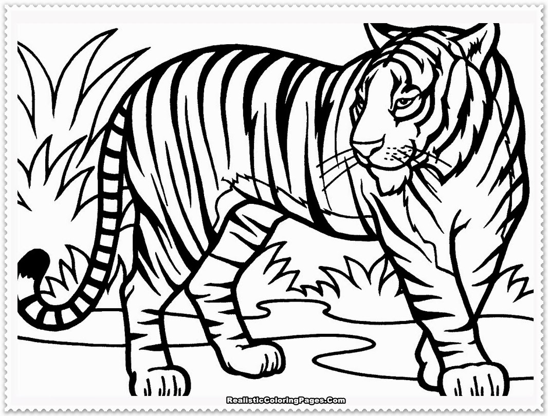 Tiger Coloring Pages Animal Coloring Pages 28 Free Printable