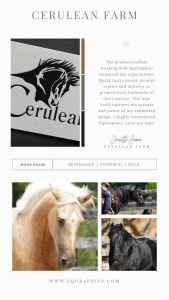 Vector Style Quarter Horse Head Logo Presents Multiple Use Possibilities