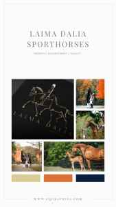 """""""Bring the Purpose of Your Equestrian Business to the Forefront With A Custom Logo """""""