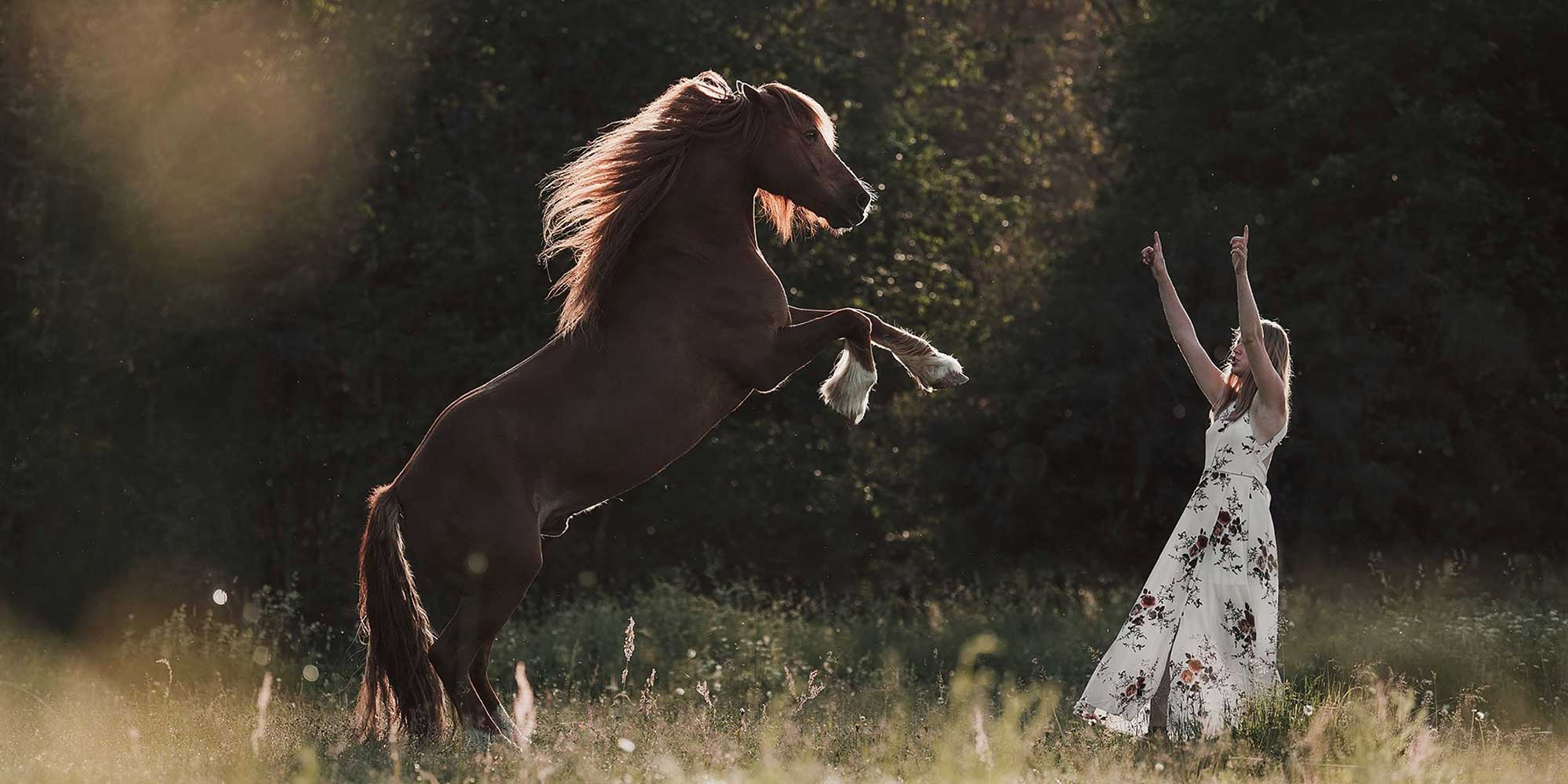 EQ Graphics   Bridleless Horse Rearing At Liberty and a Girl - Sunset Photography