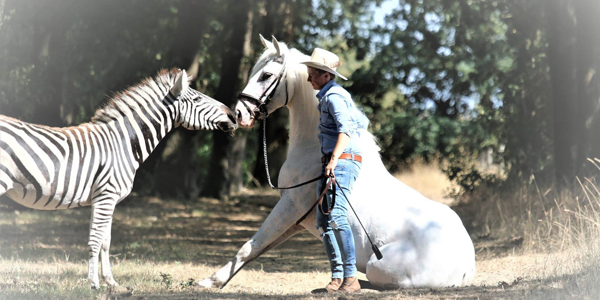 EQ Graphics   Western Photography of a Sitting Horse and Zebra