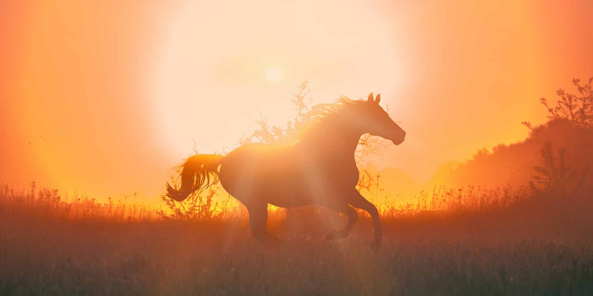 EQ Graphics   Horse Silhouette Galloping in Sunset