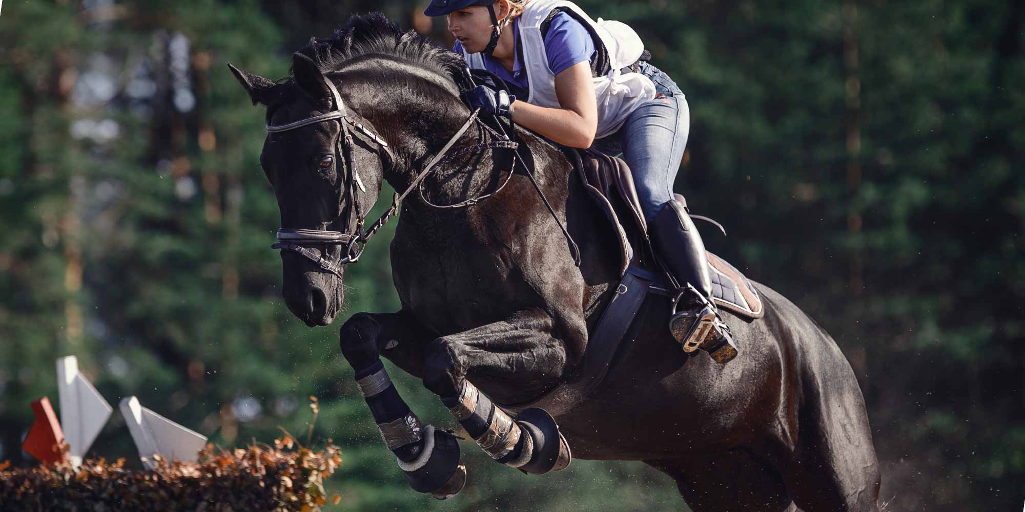 EQ Graphics | Cross Country Rider and Jumping XC Horse Photography