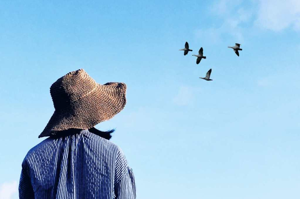 Person in a hat looking up at passing birds flying through a blue sky