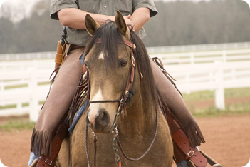 Image result for breaking a horse