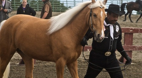 A Video of the Tennessee Walking Horse