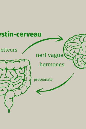 axe intestin-cerveau
