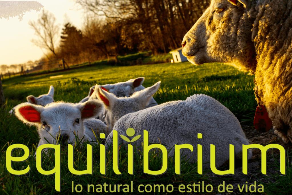 Productos sin crueldad animal