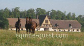 Normandie – Région Chantilly – Haras élevage et entrainement