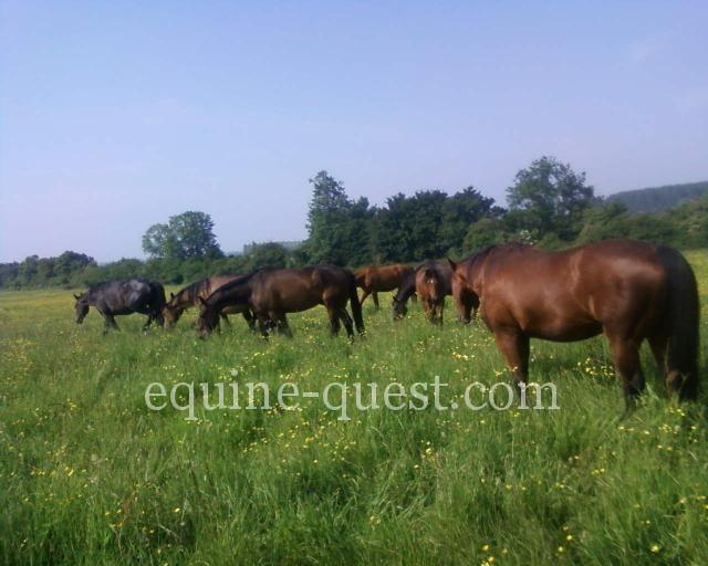 Normandy – RARE Stud farm located in the center of the Pays d'Auge