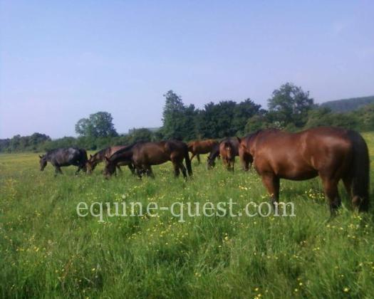 Normandie – RARE  Haras d'élevage situé au cœur du Pays d'Auge
