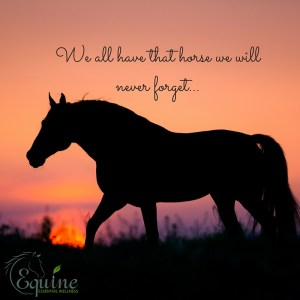 We all have that horse we will never forget... horse health for the senior horse