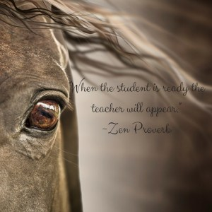 Teacher - Horsemanship