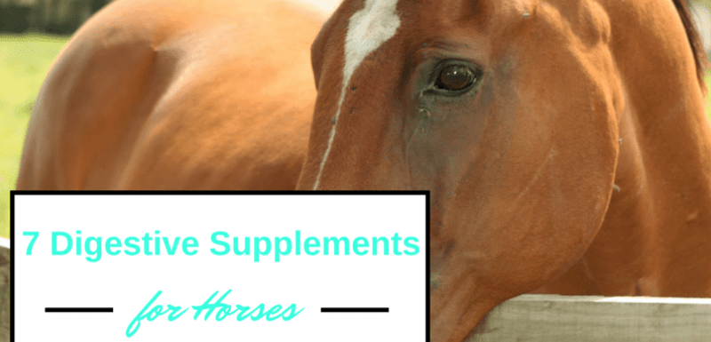 7 Natural Digestive Supplements for Horses
