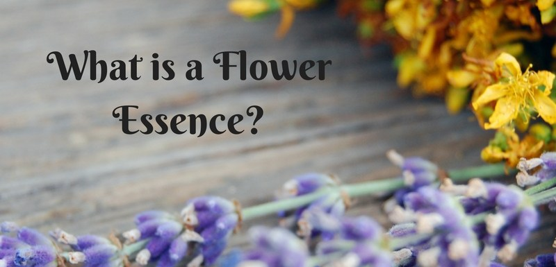 Why Choose Flower Essences for Your Horse