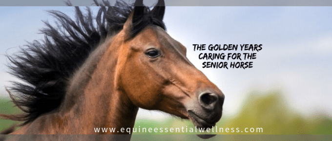 The golden years caring for the senior horse
